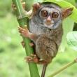 Photograph: Geoff Deehan/IUCN