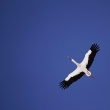 a-white-stork_reuters