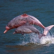 Hk Dolphin Conservation Society/AFP/Getty Images