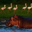 Photograph: Carl De Souza/AFP/Getty Image