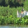 Pantanal Norte, Reserva Sesc