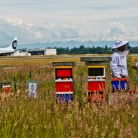 seattle-hives_1