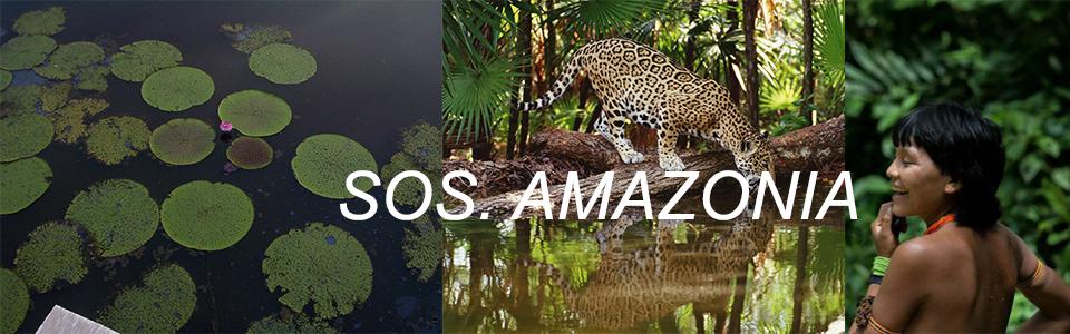 Focus – SOS AMAZONIA
